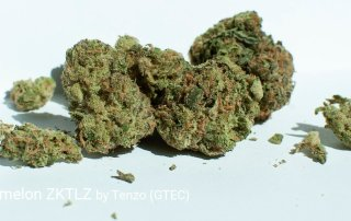 21.20% THC Watermelon ZKTLZ by Tenzo