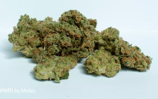 22.5% THC Gelatti by Msiku