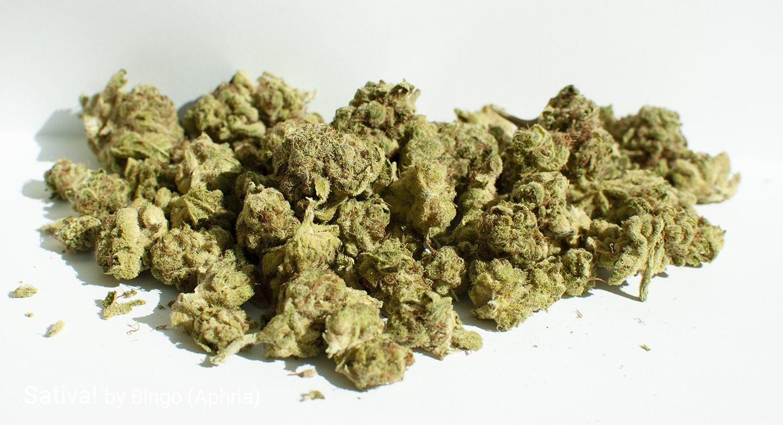 14.57% THC Sativa! by Bingo