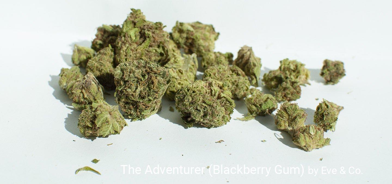 16.69% THC The Adventurer (Blackberry Gum) by Eve & Co.