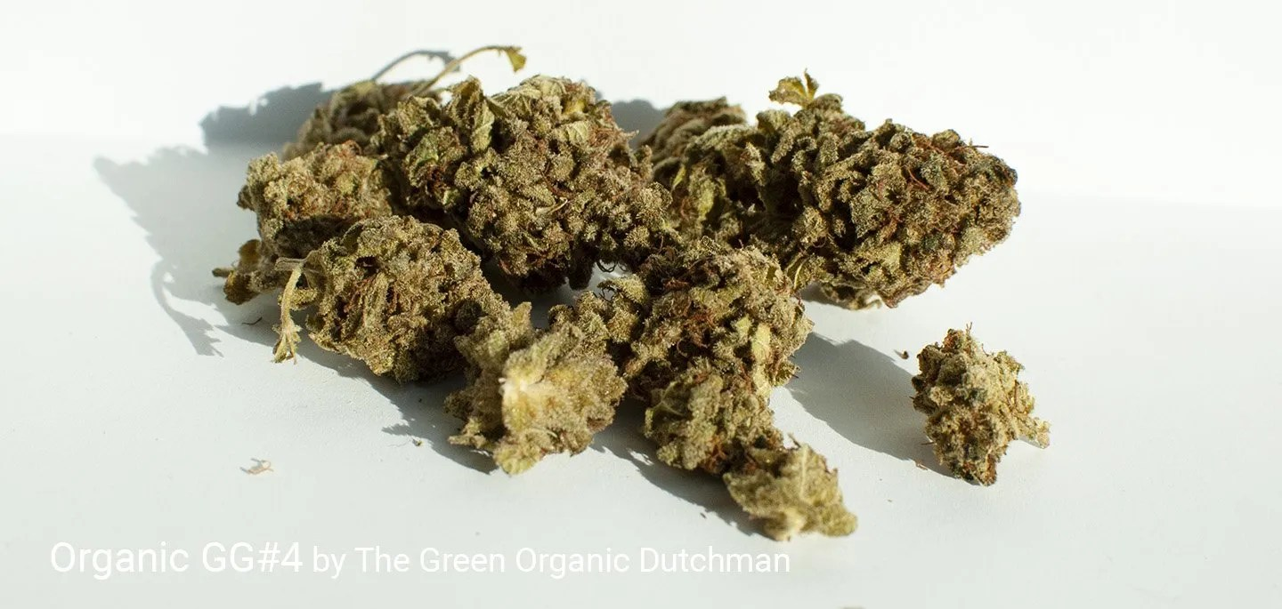 19.69% THC Organic GG#4 by The Green Organic Dutchman