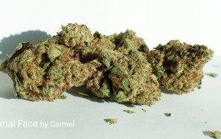 25.88% THC Animal Face by Carmel