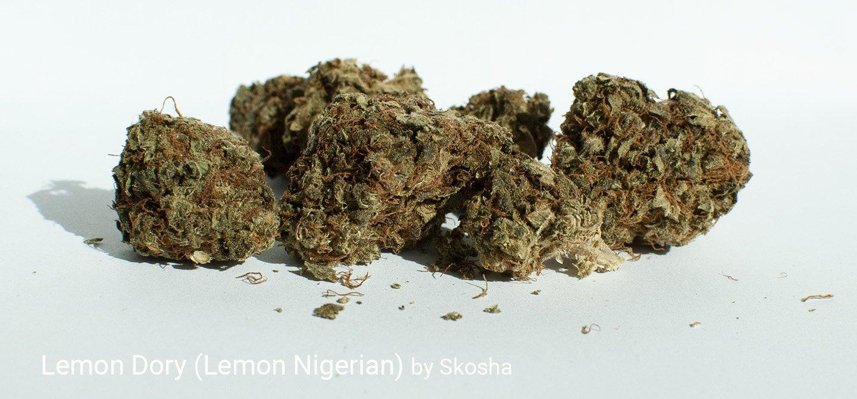 15.937% THC Lemon Dory by Skosha