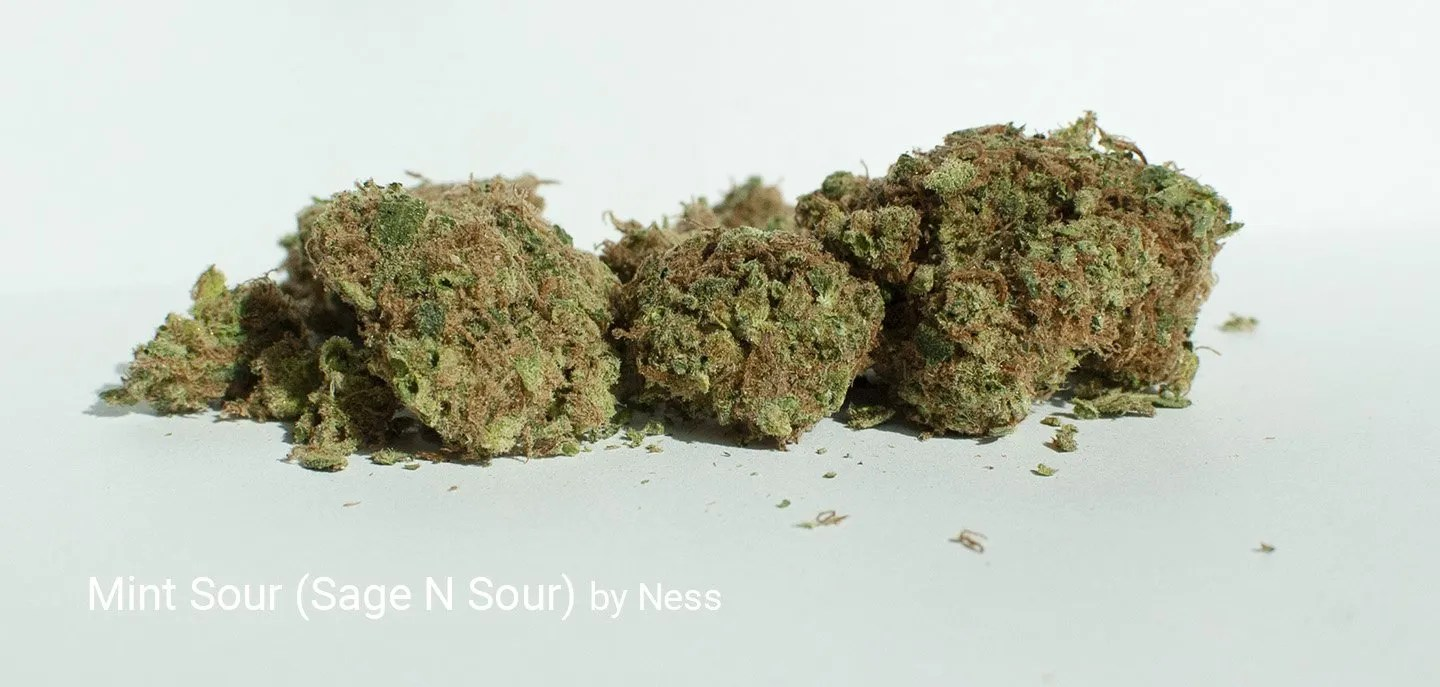 22.4% THC Mint SOur aka Sage N Sour by Ness