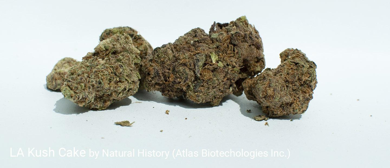 23.2% THC 3.1% Terpenes LA Kush Cake by Natural History