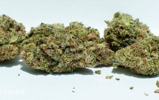 20.07% THC 4.26% Terpenes MAC 1 by Carmel