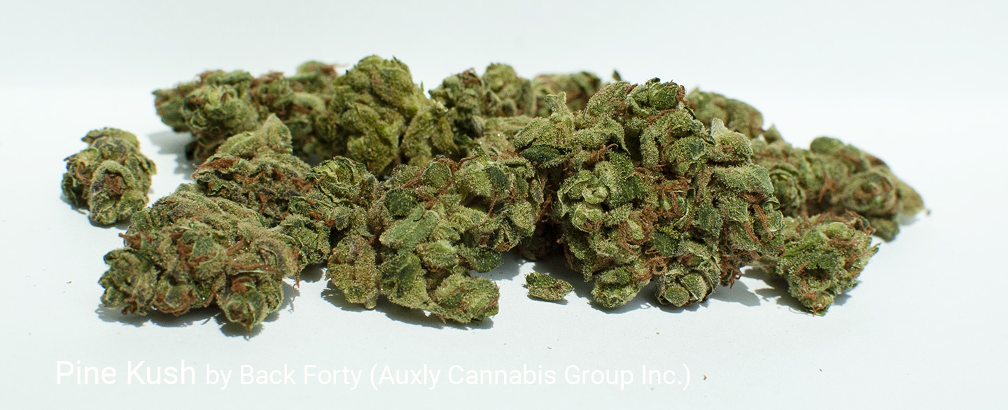 19.27% THC Pine Kush by Back Forty