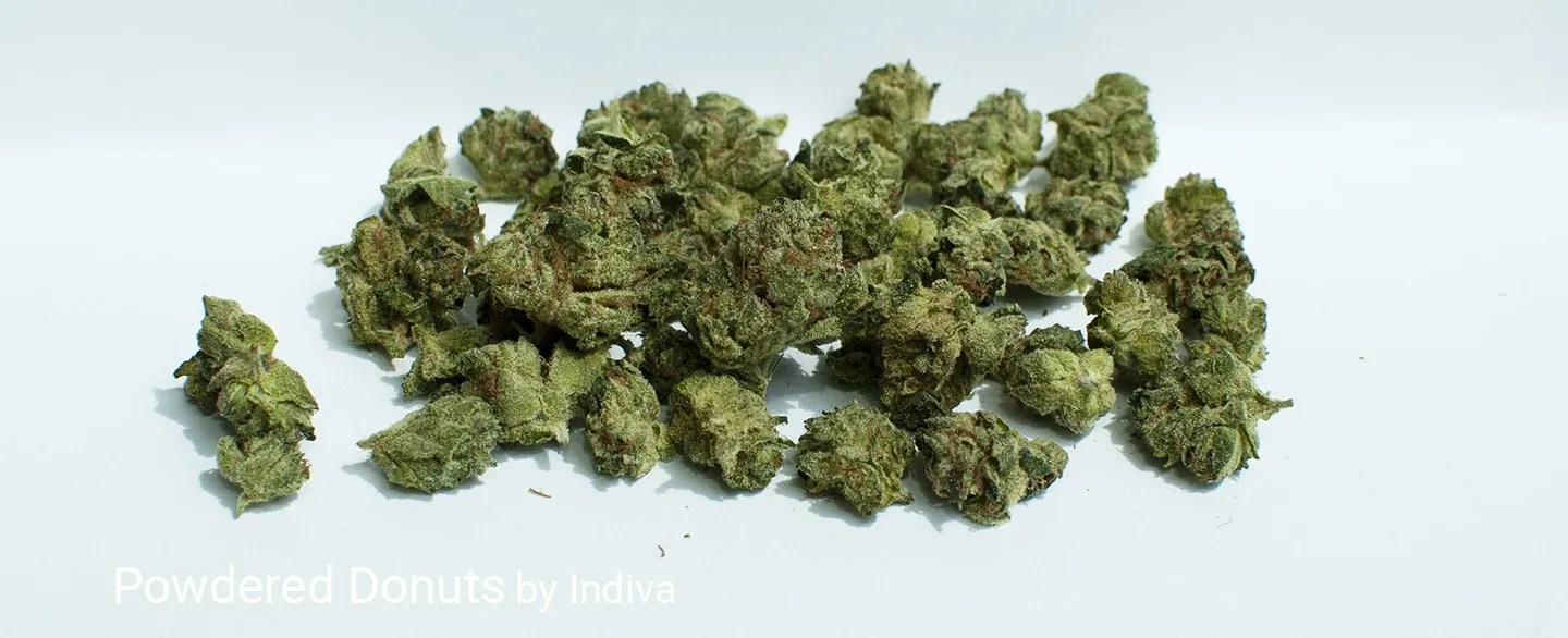 23.77% THC 1.99% Total Terpenes Powdered Donuts by Indiva