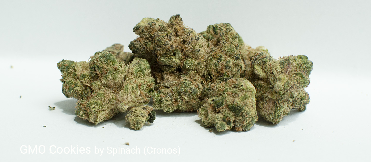 30.9% THC GMO Cookies by Spinach