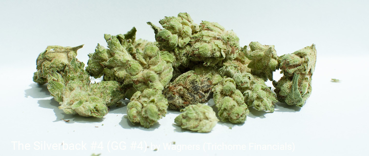 21.35% THC The Silverback #4 by Wagners