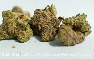 25.61% THC 1.06% Terpenes Florida Citrus Kush by Mood Ring