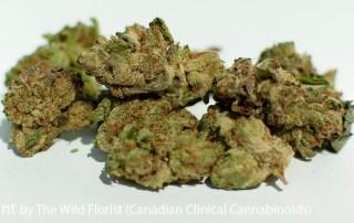 23.63% THC Magic Mint by The Wild Florist
