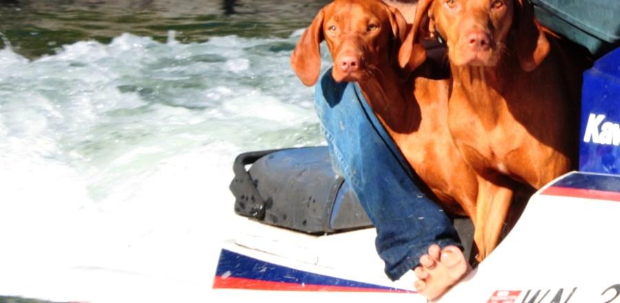 Valori Bordon_Jet Skiing Pups
