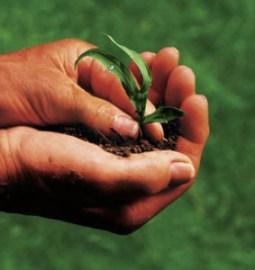 corsi gratuiti in agricoltura in Puglia