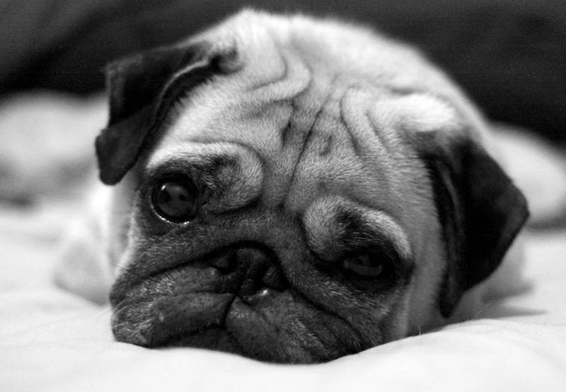 Image Result For Canine Allergy Testing Cost