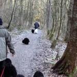 Puli Winterwanderung in Witten Bild 5