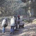 Puli Winterwanderung in Witten Bild 10