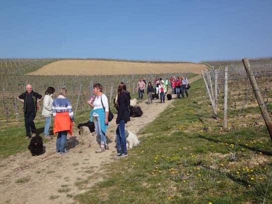 Frühlingswanderung der Landesgruppe Mitte in Gau Algesheim 15