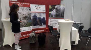 World dog show Leipzig 2018 Puli Stand Begutachtung