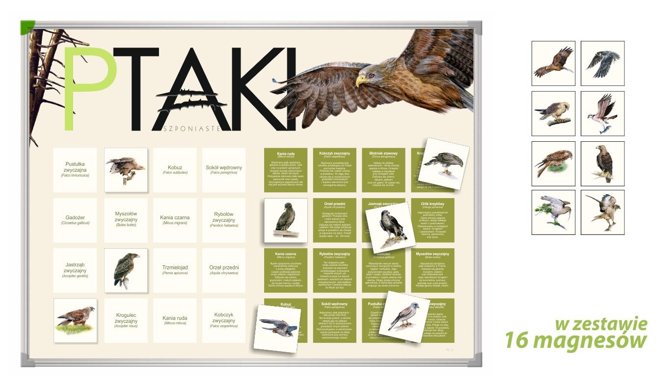 TM-9 - Ptaki szponiaste (tablica magnetyczna, gry przyrodnicze, pomoce dydaktyczne przedszkole)