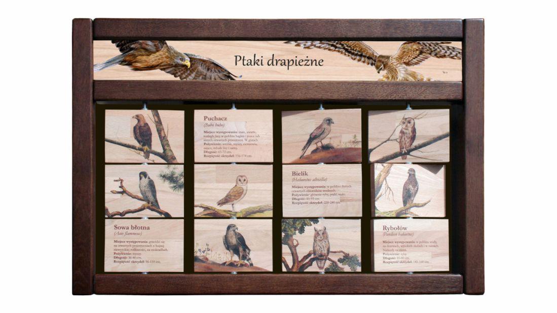 ZIDM-14 - Tablica interaktywna - Ptaki drapiezne