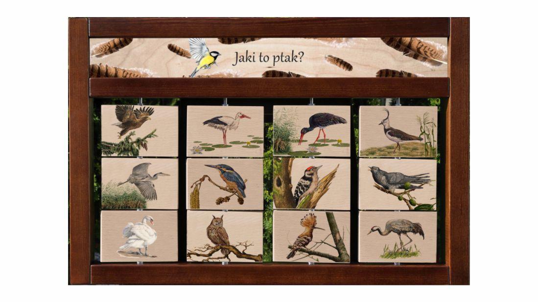 ZIDM-5 - Tablica interaktywna - Jaki to ptak