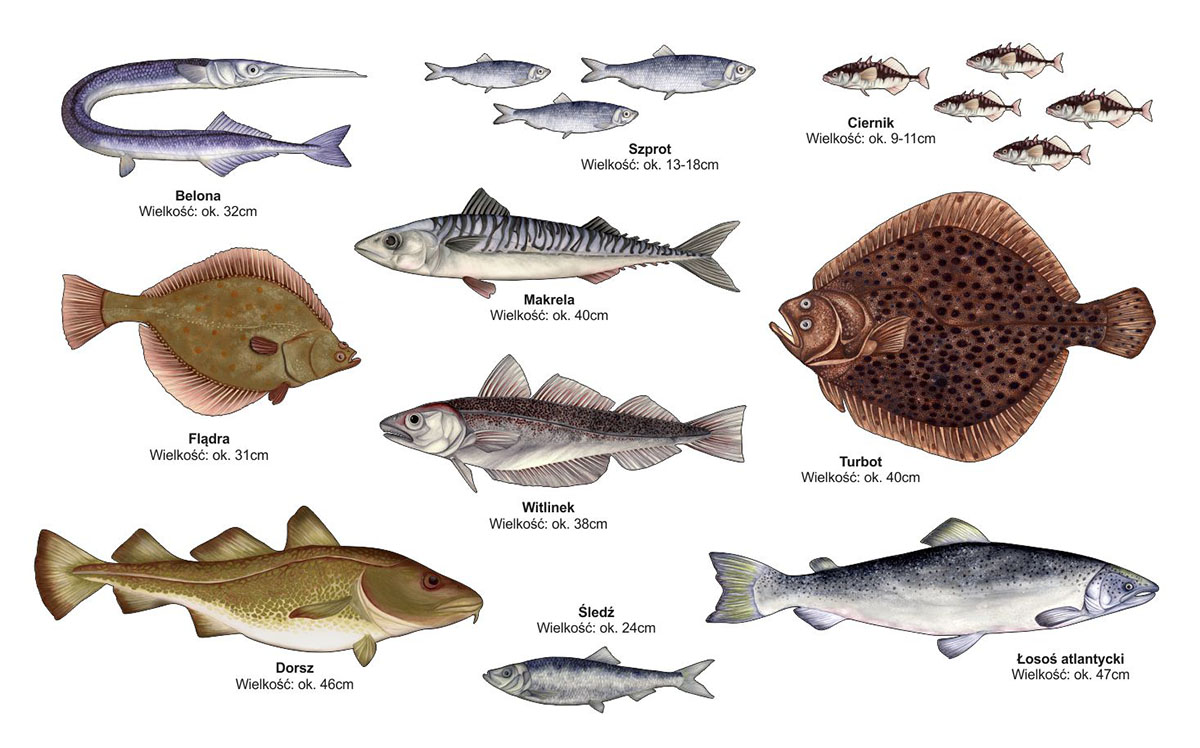 Dekoracje ścienne - Ryby morskie