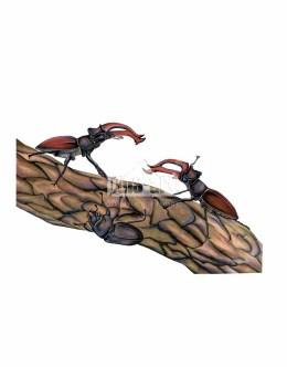 Jelonek rogacz (Lucanus cervus)
