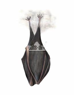 Podkowiec mały (Rhinolophus hipposideros)