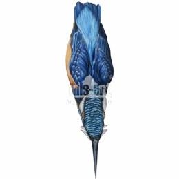 Zimorodek zwyczajny (Alcedo atthis)