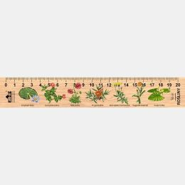 LESs-24 - Rosliny (linijka drewniana)
