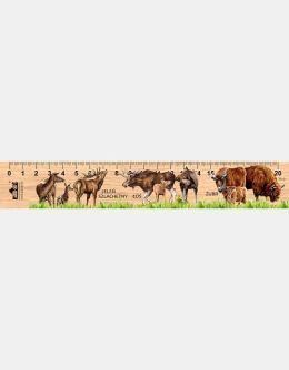 LESs-74 - Duze ssaki (linijka drewniana)