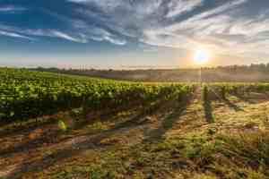farming and solar