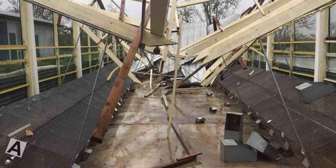 Mueren animales en granja del RUM tras paso del huracán María
