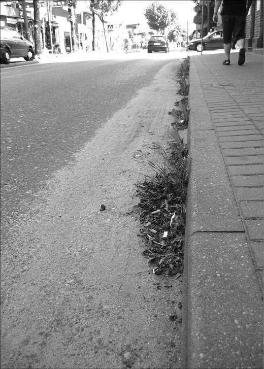 Na ul. Rzeźnickiej zalegający piach i deszcz sprawiły, że na jezdni pojawiły się chwasty.