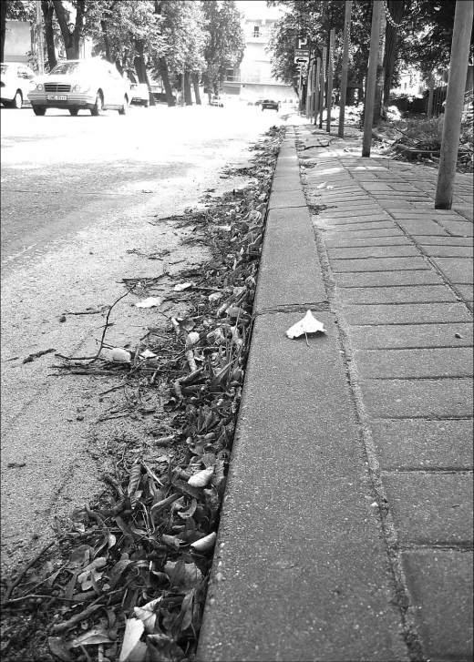 Na ul. Dworcowej po obu stronach jezdni leżą liście. Jesienią pewnie ich przybędzie...