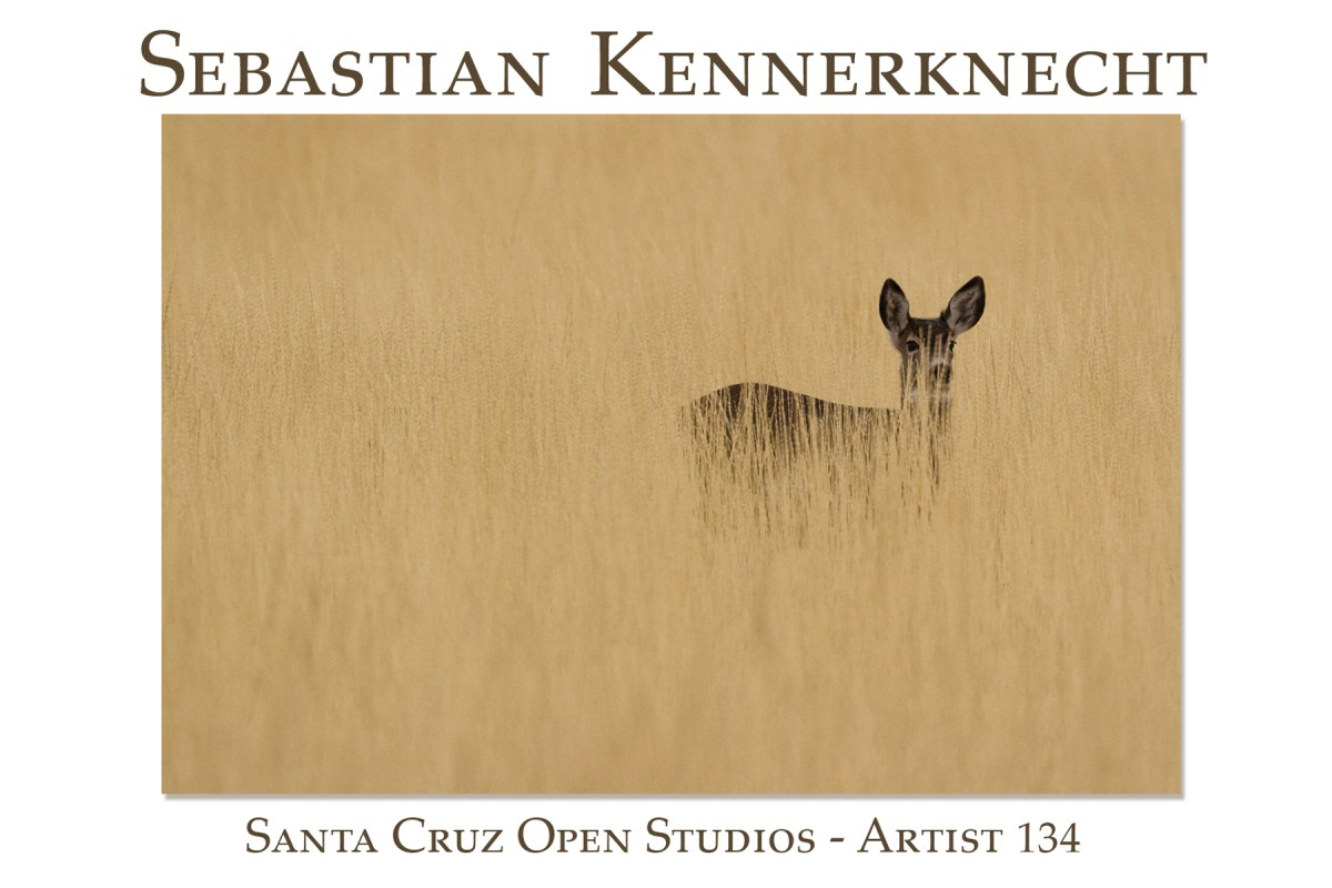 2011 Santa Cruz Open Studios Postcard