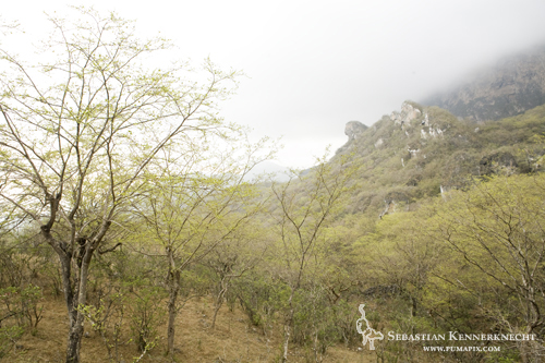 Cloud forest, Hawf Protected Area, Yemen