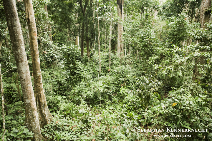 Tropical rainforest, Lope National Park, Gabon
