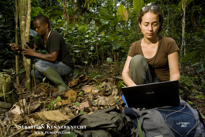 African Leopard (Panthera pardus pardus) biologist Laila Bahaa-el-din reviewing camera trap images on computer while Arthur Dibambo attaches camera trap to tree, Lope National Park, Gabon