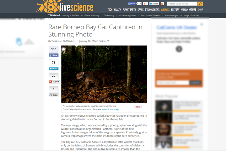 Screenshot of Bay Cat story of LIveScience