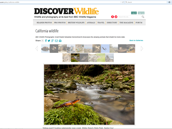 The magazine posted seventeen of my California Wildlife pictures on their website!