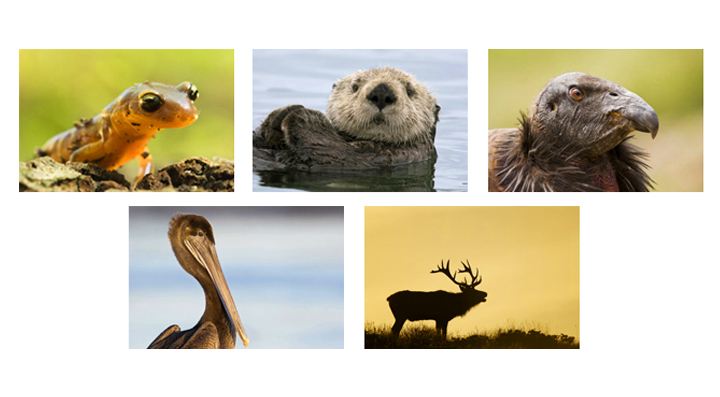 california wildlife photography workshop