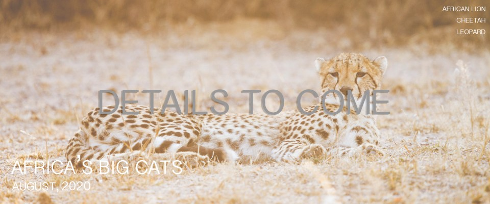 Wild Cat Photography Tours