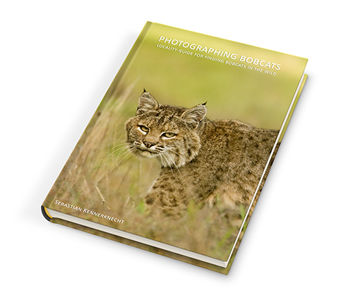 Ebook - Photographing Bobcats - Locality Guide for Finding Bobcats in the Wild_SMall