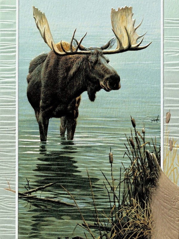 Wading Moose Wildlife Themed Greeting Cards