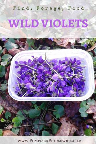 Find Forage Food wild violets for tea and syrup at PumpjackPiddlewick