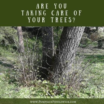 Are you taking care of your trees and pruning suckers? | PumpjackPiddlewick
