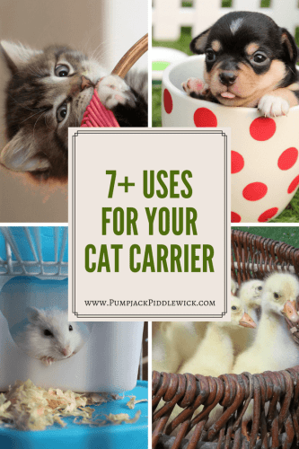 7 uses for your cat carrier from Pumpjack Piddlewick