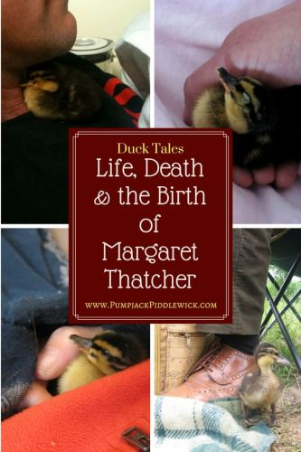 Life Death and the Birth of Margaret Thatcher in Duck World at PumpjackPiddlewick